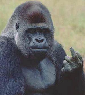 ape-finger-b2